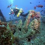 Ewa przy kotwicy zapasowej niemieckiego okrętu transportowego, znanego jako KT-12, który został storpedowany w czasie dziwiczego rejsu 1943 roku. Zatonął na głębokości 35 metrów, niedaleko miejscowości Cala Ganone - Sardynia wrzesień 2009.