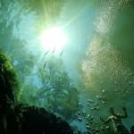 Wyjście z jaskini Ginnie Springs na Florydzie. Na brzegu otworu jasiniowego stoi zaciekwawiony turysta. Miejscowość High Springs kwiecień 2008 roku.